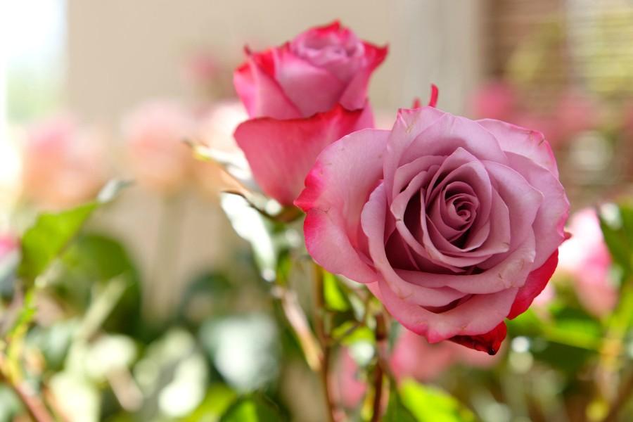 Meine Wünsche für die Tochter von Miriam Pielhau <3